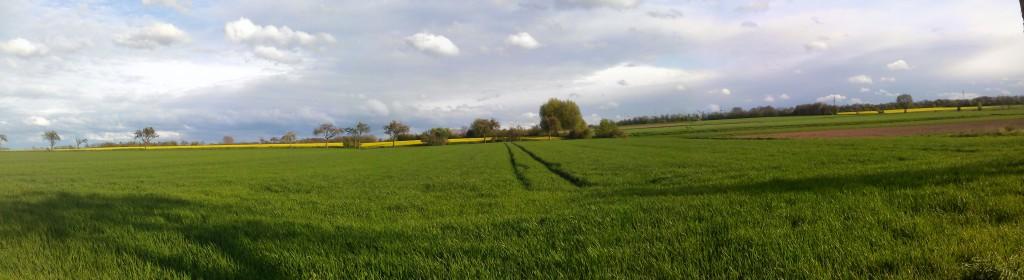 Felder in der Soest Börde