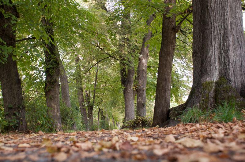 Der Wall in Soest mit altem Baumbestand ©Werner Tigges